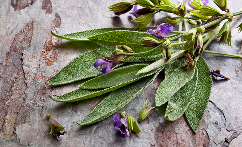 Sage: An Inexpensive Remedy for Hot Flashes
