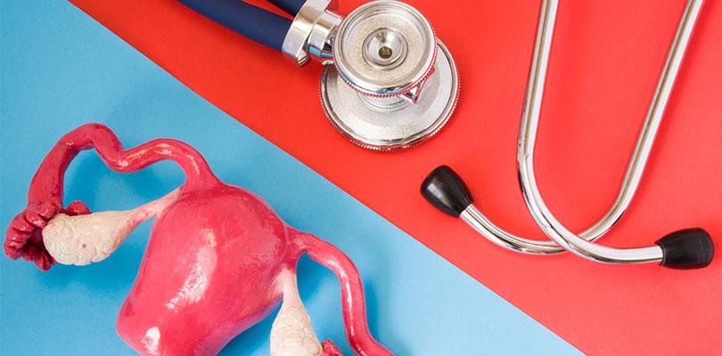 Stethoscope and anatomy model of a uterus